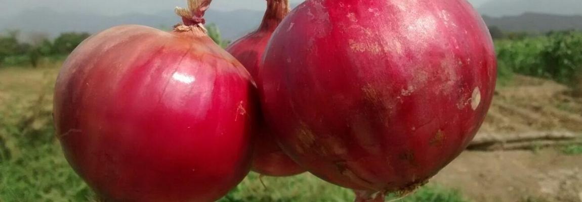 Bienvenidos a nuestro sitio web - Proyecto Cebolla