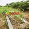 Organización y gestión para la  cadena productiva de cebolla